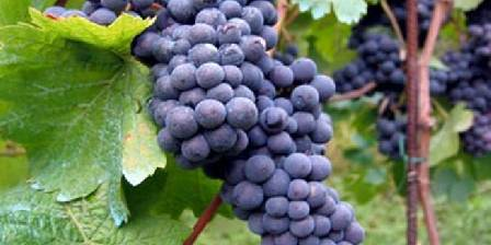 Auberge La Guienette Le vin d'Arbois