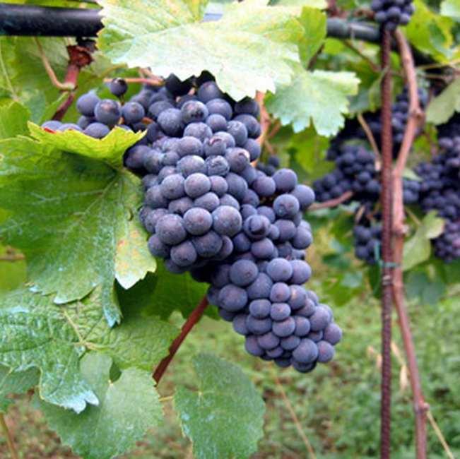Chambre d'hote Jura - Le vin d'Arbois