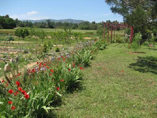 Chambre d'hote Vaucluse - Jardin cultivé en bio sur un hectare