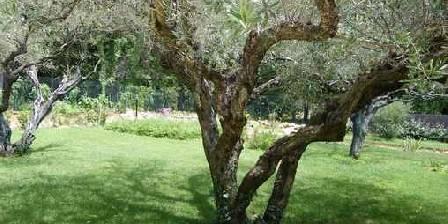 Les Buissonnets Sous les oliviers