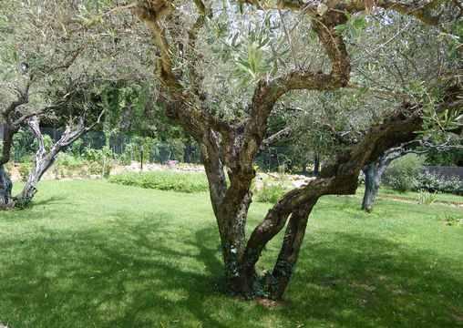 Chambre d'hote Gard - Sous les oliviers