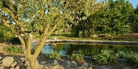 Mas du Caprier Le bassin naturel de nage