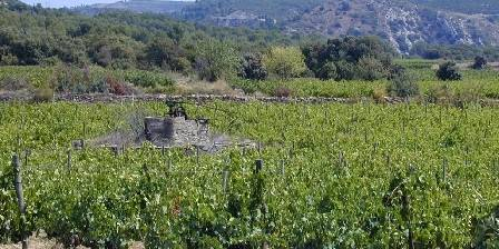 Clos Centeilles La noria au milieu des vignes