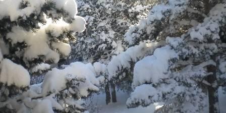 Chalet Pomme de pin Jardin en hivers