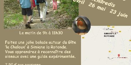 Gite de Chaloux Sortie découverte des oiseaux