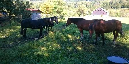 Chambre d'hôtes Ramonchamp Nos chevaux