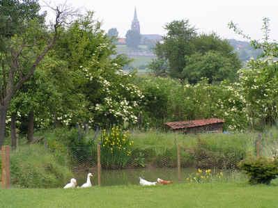 Chambre d'hote Nord - Vue sur la campagne pévèloise, de notre jardin...