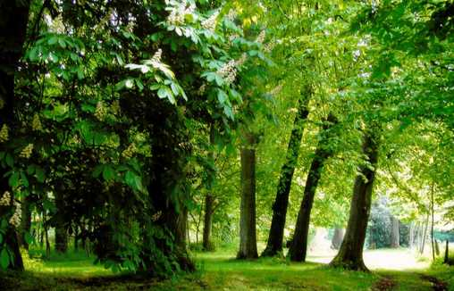 Chambre d'hote Somme - Une vue du parc