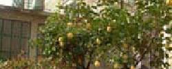 Chambre d'hotes Les Citronniers