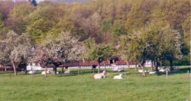 Chambre d'hote Bas-Rhin - La ferme