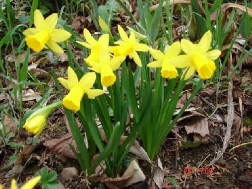 un petit coin de rocaille au printemps