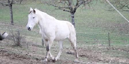 Ferienwohnung Gîte de Fontepaisse > notre cheval curieux Salto > Klicken Sie hier um das Foto zu vergrößern