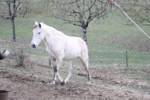notre cheval curieux Salto