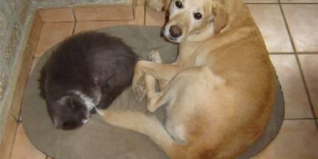 Gîte de Fontepaisse Qui a dit ` Se battre comme chien et chat ? `