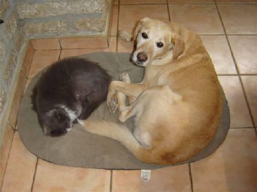 Qui a dit ` Se battre comme chien et chat ? `
