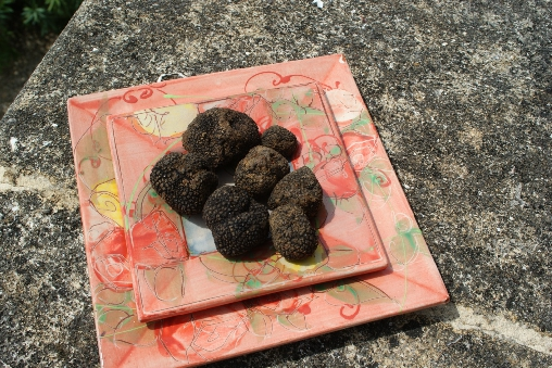 week end truffe