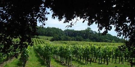 La petite Madeleine Magnifique vue sur les vignes