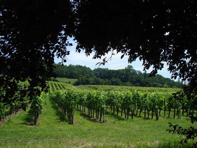 Chambre d'hote Gironde - Magnifique vue sur les vignes