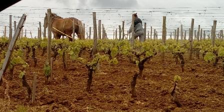 La petite Madeleine Travail dans les vignes alentours