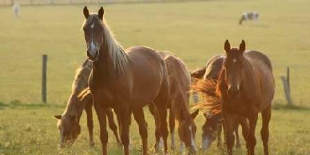 Domaine de la Fromagerie En Pays d'Auge, les chevaux...