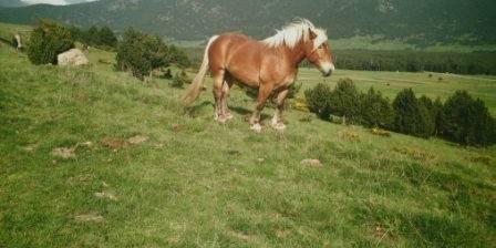 Le Serpolet L'élevage de chevaux comtois sous les fenêtres