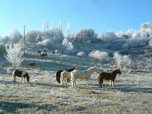 été, hiver, l'équitation buissonnière
