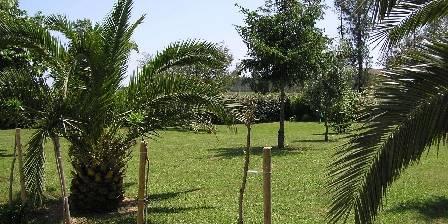 Les Palmiers Jardin