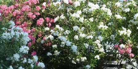 L'escale Provençale Jardin fleuri