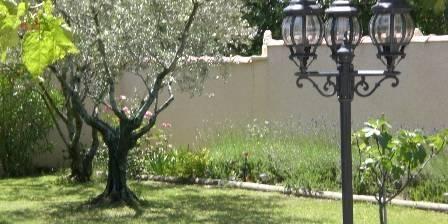 La Farigoule  en Provence Une partie des oliviers