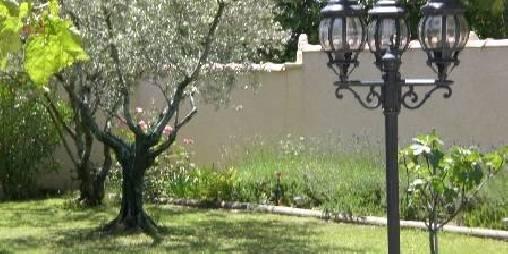 Chambre d'hote Vaucluse - une partie des oliviers