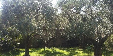 La Farigoule  en Provence Les oliviers