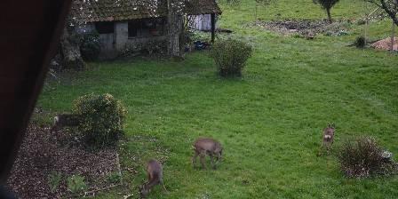 Le jardin sauvage Des hôtes pas comme les autres!!!