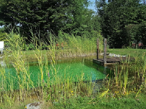 La piscine naturelle en été