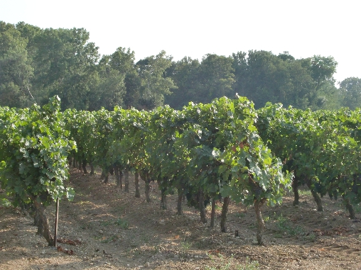 la vignoble