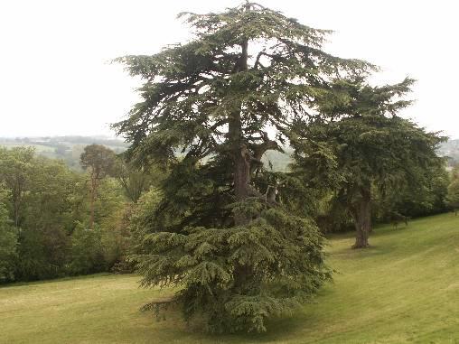 Chambre d'hote Mayenne - Le parc.