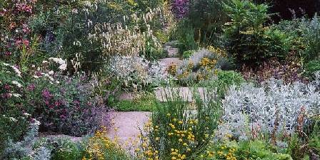 Le jardin d'Agapanthe