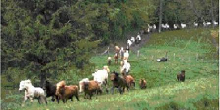 Le poney club de Bois Guilbert