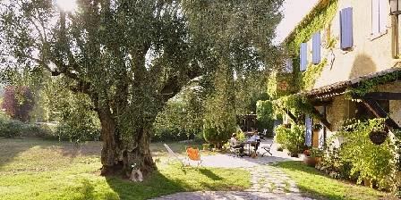 Le Mas Roquemiaine Sous l'olivier...