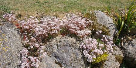Fromont Viviane Fleurs de rocaille