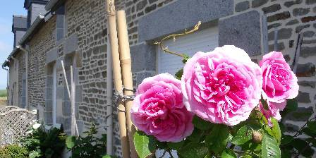 Fromont Viviane Roses anglaises