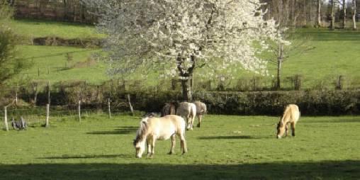 Chambre d'hote Corrèze - Chevaux dans la prairie