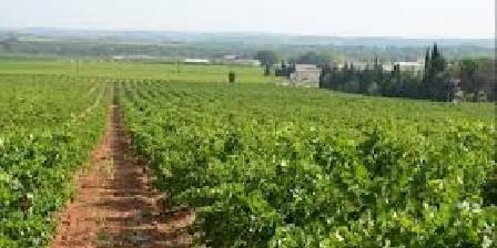 La Villa Sépia La Villa Sépia, Les vignes