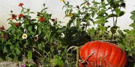La Ferme De Beaupre Légumes et fleurs en heureuse harmonie