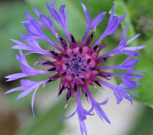 Chambre d'hote Dordogne - Une fleur du jardin