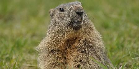 Chalet La Providence Une marmotte