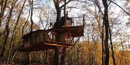 Cabanes du Bois Clair Mandubienne (3 Quercus + Canopée)