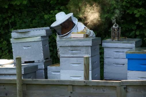 Jean (le propriétaire) dans son rucher.