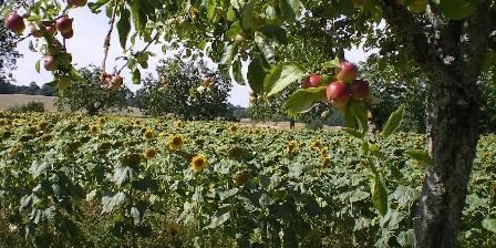 Le Couvent de l'Orée Les pommiers du Pays d'Othe