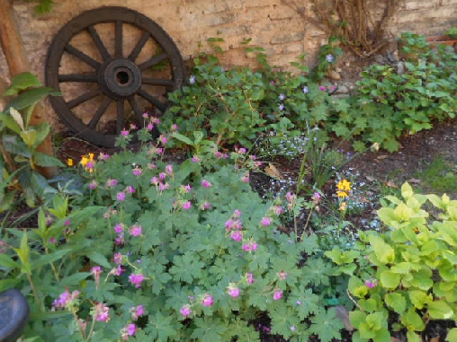 Chambre d'hote Bas-Rhin - jardin de Anne