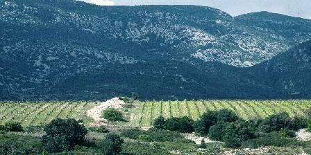 Les Hauts D'issensac Les vignes environnantes